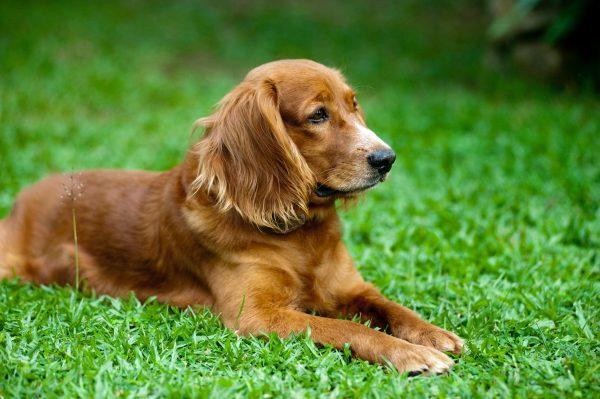 Ustalenie profilu DNA psa